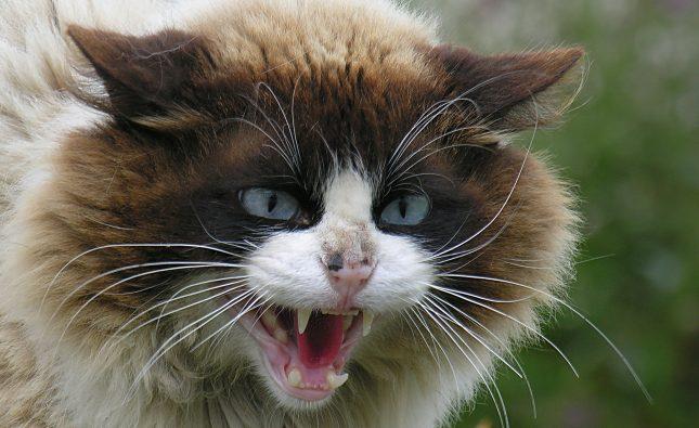 As 3 coisas essenciais para entender a linguagem do gato